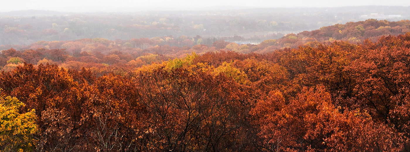 Aerial view of trees turning red in the fall